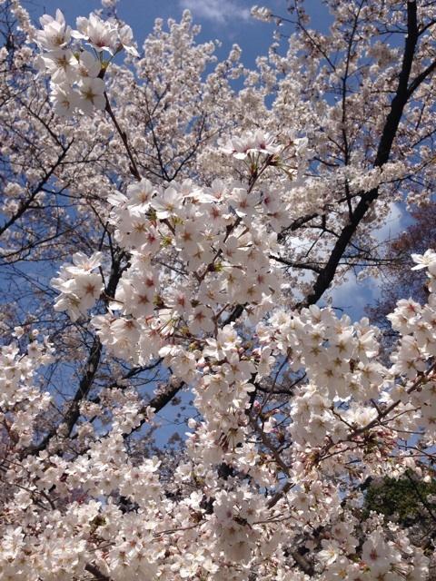 大阪アプリ開発のお花見イベントin大阪城公園
